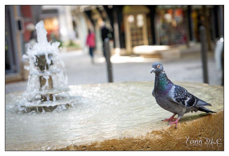 LUMIXDAY 2012 Bourgogne les photos Lumix2012-01